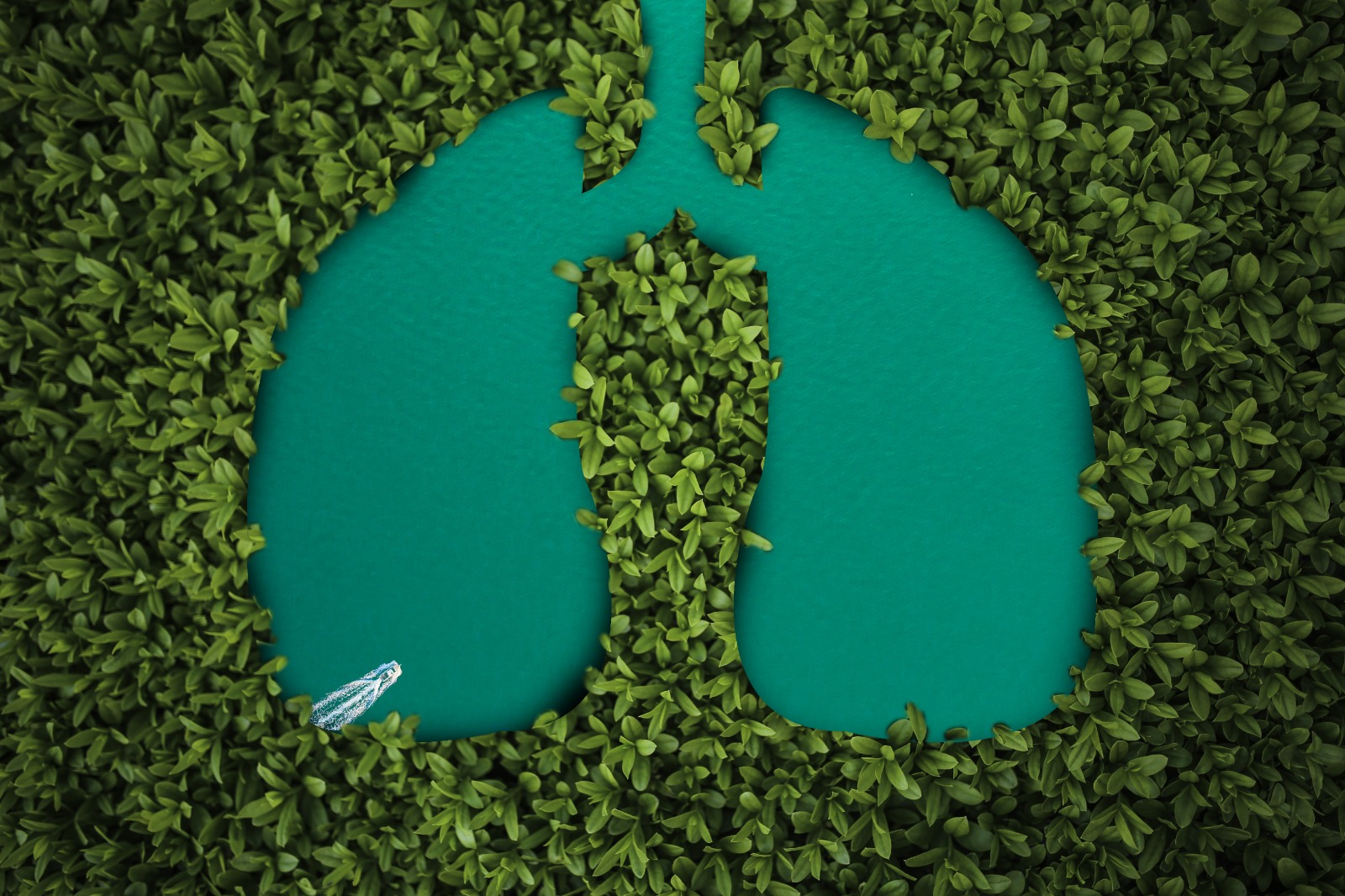 四藥合治肺癌 壽命增半