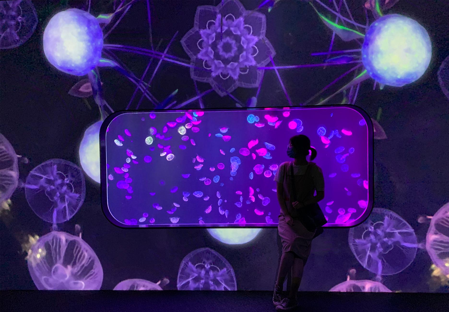 香港首個海洋探索館 與真假水母互動