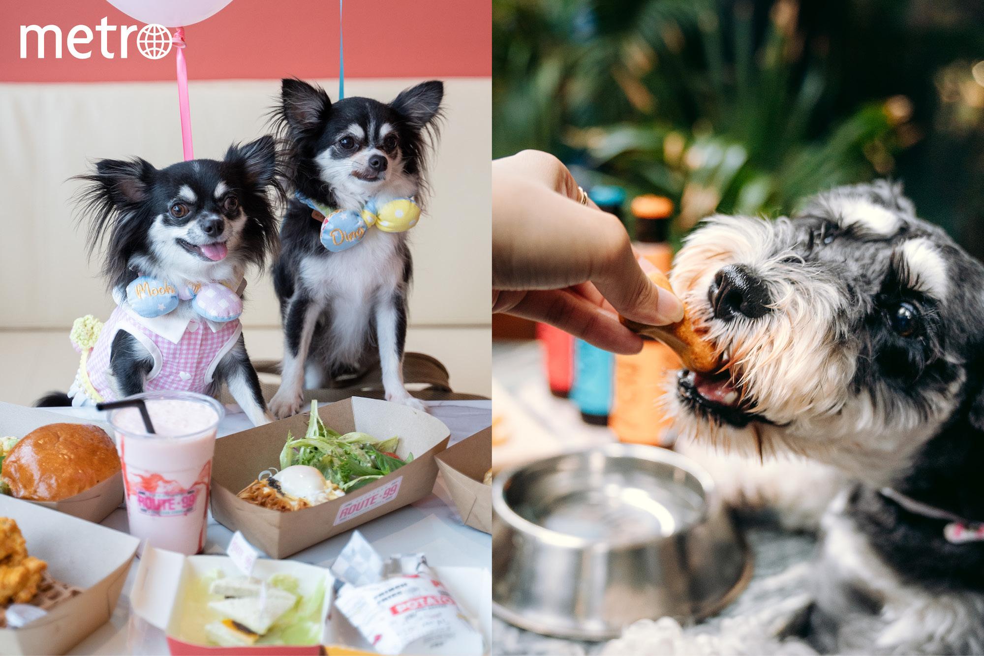 【 狗狗好去處 】五大人氣寵物友善餐廳